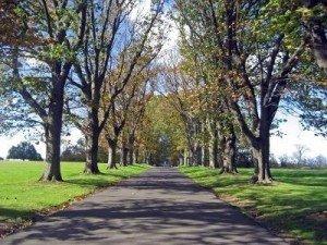 Texte inspiré d'une photo : longue allée d'arbres, dans une clarté verdâtre, halo lumineux au fond (Alain). 592617-la-longue-allee-a-garni-des-arbres-pendant-l-mi-automne-300x225
