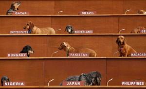 1189787-des-chiens-parodient-une-assemblee-des-nations-unies