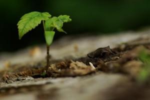 arbre-pousse-1