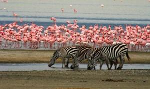 ma-flamingos