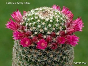 bful_cactus_plants_34
